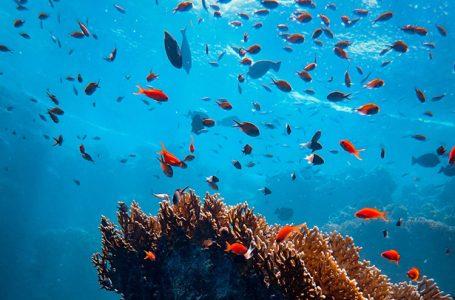 اقیانوس: زندگی و معیشت